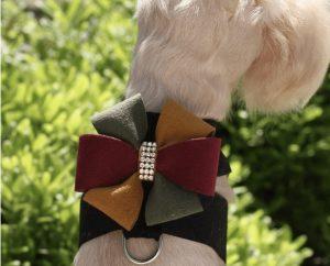 Autumn Bow Tinkie Harness