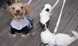 organic harness set by louisdog