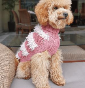 Game of Bones Dog Sweater