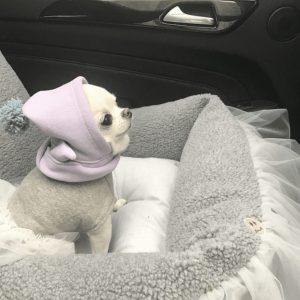 Tutu/Driving Kit by Louisdog