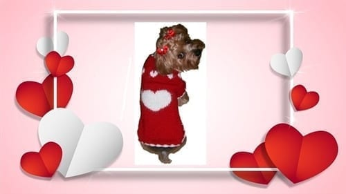 Red Heart Sweater by Dallas Dog