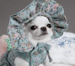 My Bonnet by Louisdog