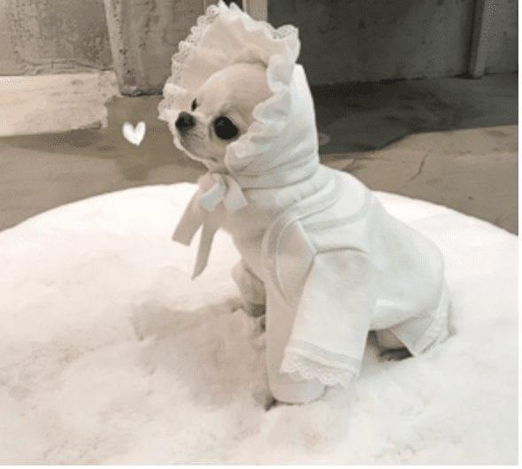 My Cardigan by Louisdog