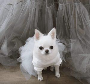 organic tulle dress