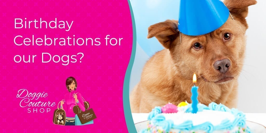 Birthday-Celebrations-for-our-Dogs