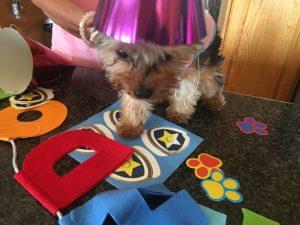 Lexi's Birthday