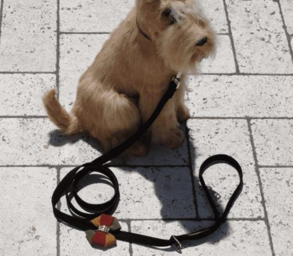 autumn leash