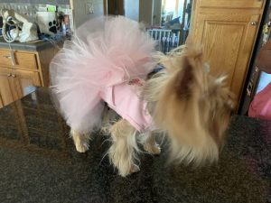 Doggie Couture Shop Logo Tutu Dress