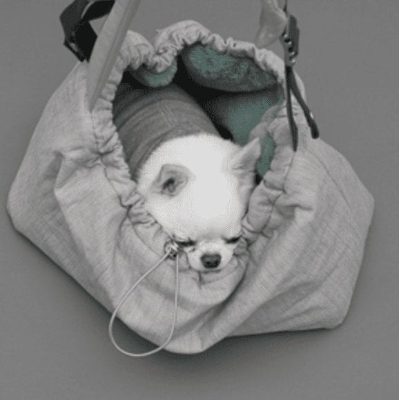 winter magic dog carrier
