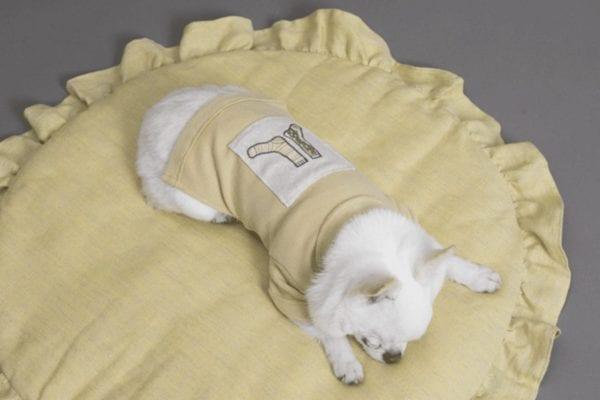 Applique Dog T-Shirt in lemonade