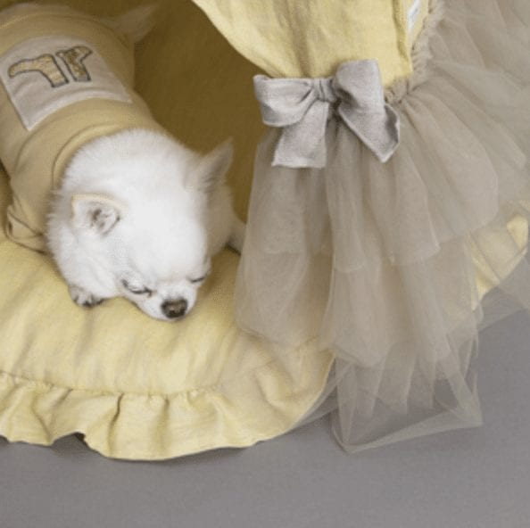 peekaboo dog bed in lemon