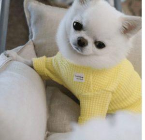 Waffle Tee in Yellow