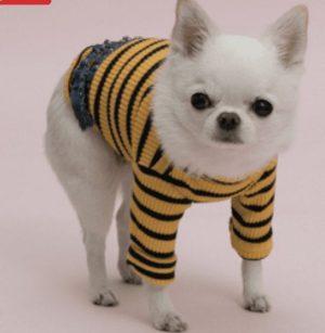 Sweet Frills Dog Shirt