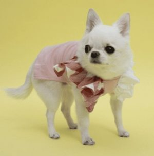 flutter sleeveless dog shirt in heavenly pink