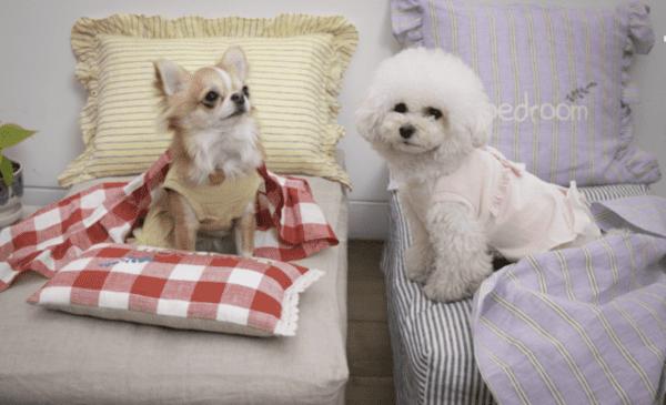 Vera Dog Dress