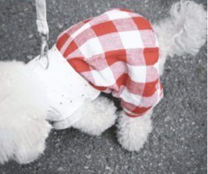 Pumpkin Dog Playsuit