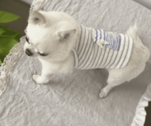 Island Time Dog Top