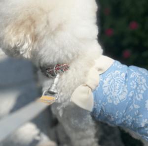 Floral 1 Shoulder Ribbon Dog Tee