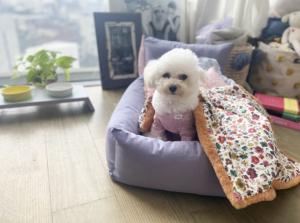 Sunday Linen Dog Bed
