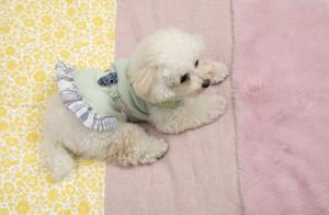 Oblique Dog Rug 5