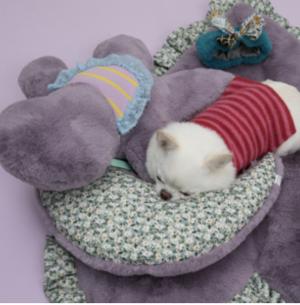 moon dog pillow