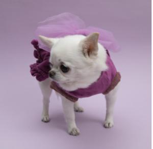 Velvety Big Bow Dog Dress