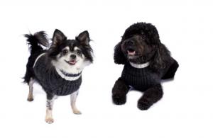 alpaca varsity cable dog sweater