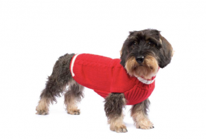 varsity cable dog sweater