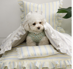 candy bar goose dog dog blanket