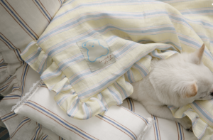 candy bar goose down dog blanket