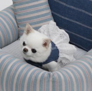 park club dog harness