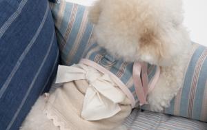 candybar dog harness set