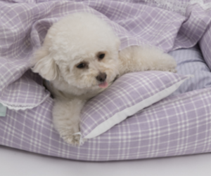 lavender dog blanket and pillow