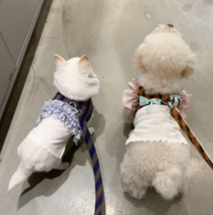 smoothie dog harness set