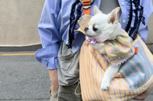 Orange Oh Sling Dog Bag