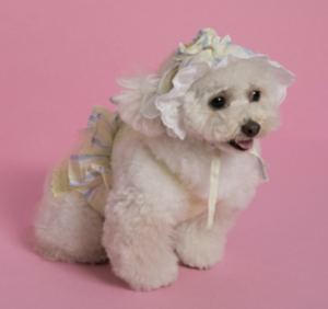 beauteous sleeveless dog shirt