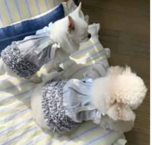 sleepy dog dress