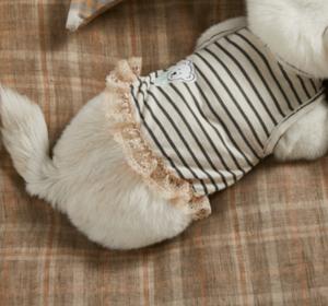 boy's tattoo dog dress