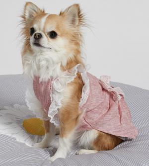 avant garde dog dress