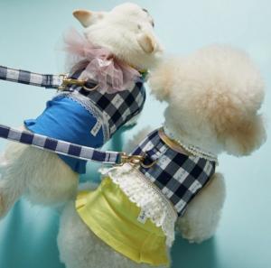 Checkerboard Dog Harness Set