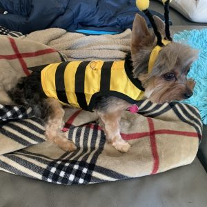 clearance bumble bee costume