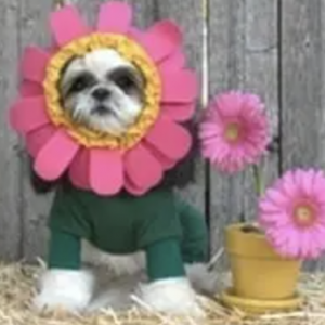 clearance flower dog costume