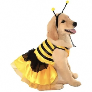 bumblebee dress costume for dogs