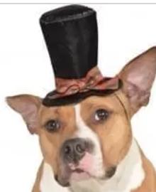 Caroler dog hat