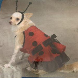 clearance lady bug dog costume