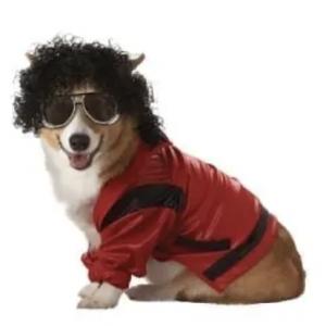 clearance pop king dog costume