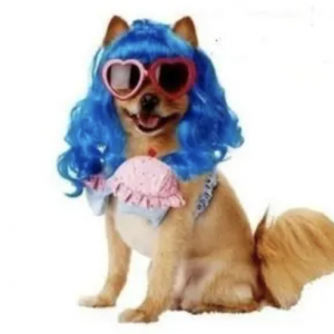 clearance cupcake girl dog costume
