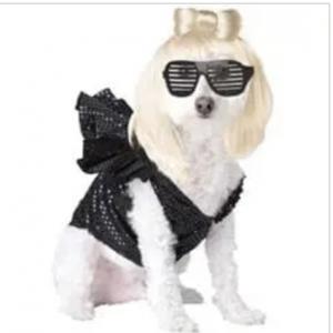 clearance pop sensation dog costume