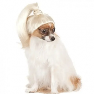 blond ponytail wig for dogs