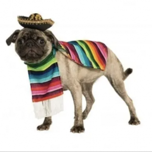 clearance mexican dog costume